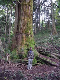 花園神社の巨木