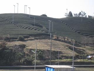 2012025-26生杉 008