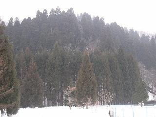 20120311生杉 047