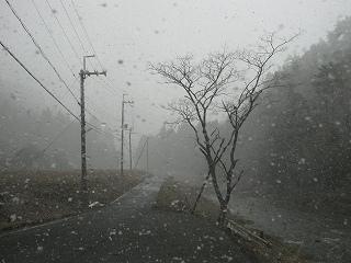 20120407-08生杉 010