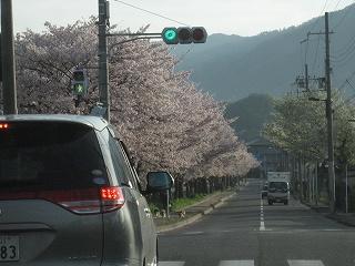 20120415生杉 002