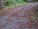 強風の影響(道路)