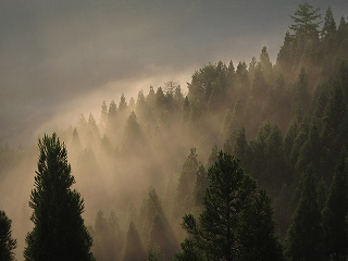朝靄のシチグレ方面