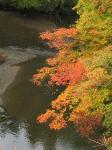 紅(黄)葉