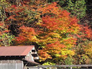 桑原の紅葉