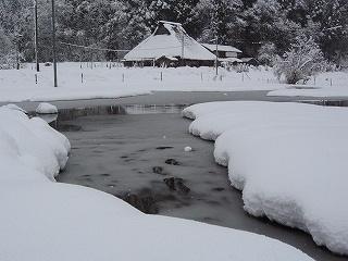 生杉の雪景色