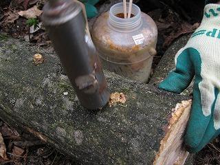 菌打ち作業