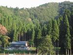 生杉の風景