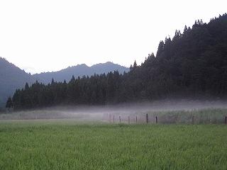 朝靄の生杉
