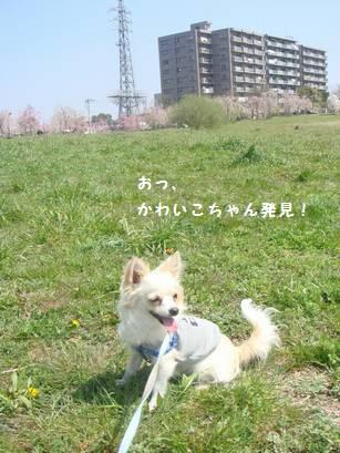 saku7_20090409175412.jpg