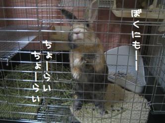 IMG_9534-1.jpg