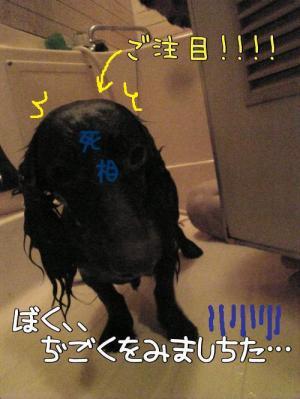 2sssZwrJ_convert_20080608013845.jpg