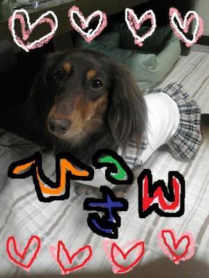Image097_convert_20080529122920.jpg
