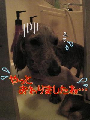oVAg8xET_convert_20080608013809.jpg
