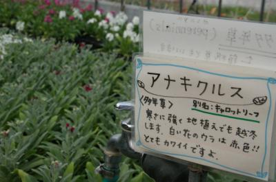 Flower Farm-4