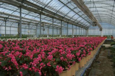Flower Farm-5
