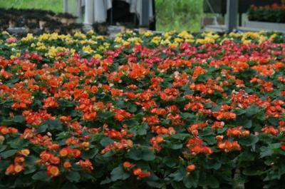 Flower Farm-6
