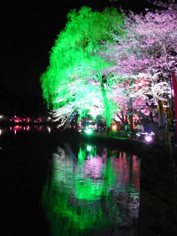 東金桜まつり-1