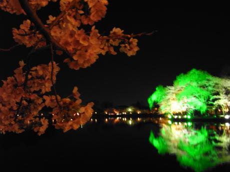 東金桜まつり-3