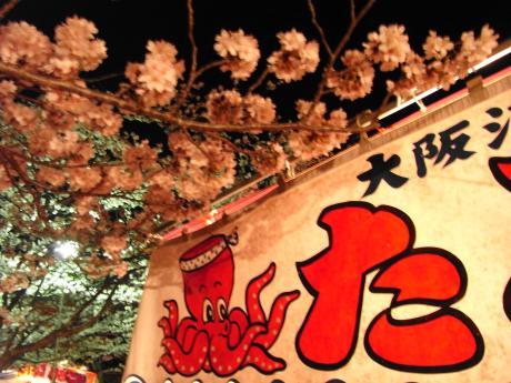 東金桜まつり-6