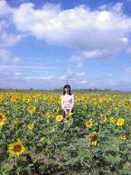 向日葵畑7