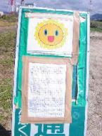 向日葵畑8
