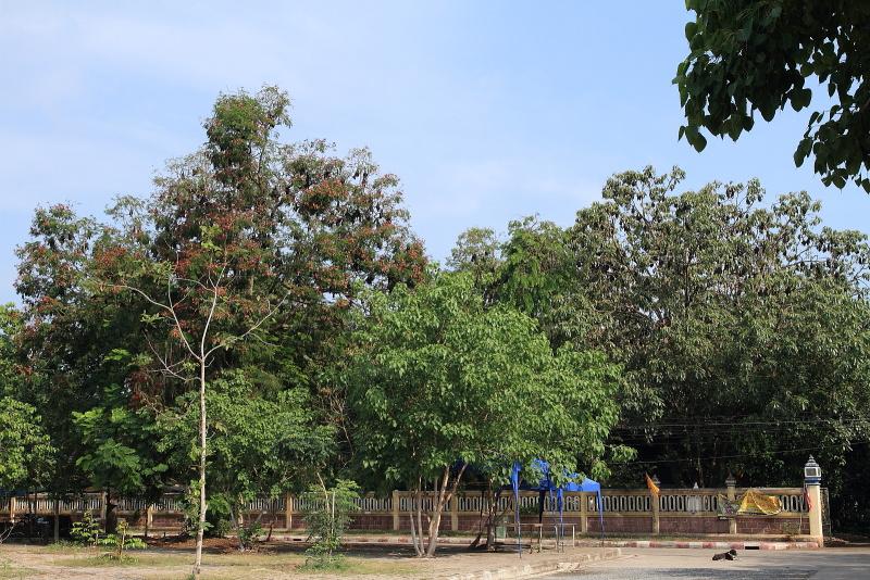 コウモリ寺