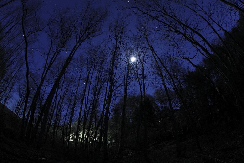 夜のハンノキ林