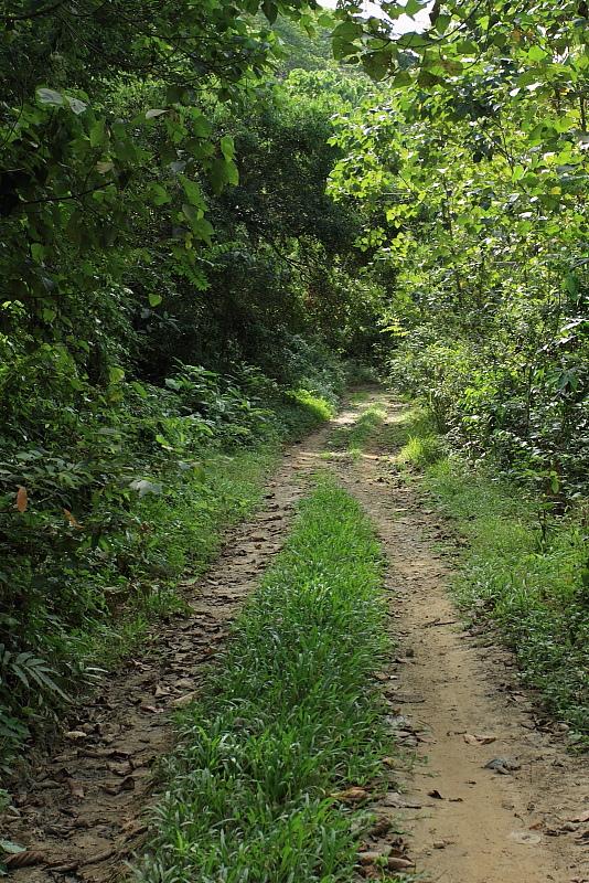 フィールドの道