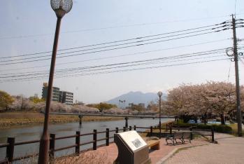 120409桜4_035