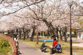120409桜2_035