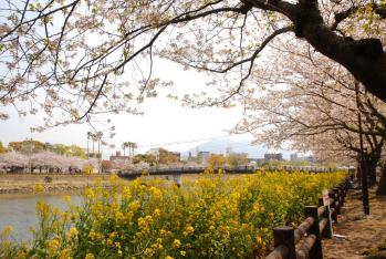 120409桜6_035