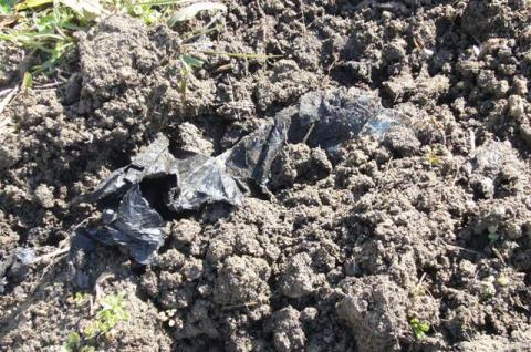 黒マルチが埋まっている!