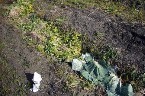 野菜などの残渣を溝に集めていました