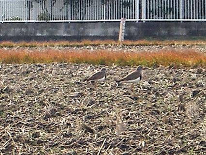 渡り鳥の夫婦
