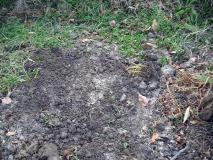 土をかけて埋めました