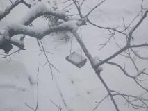 餌入れPART2にも雪が…