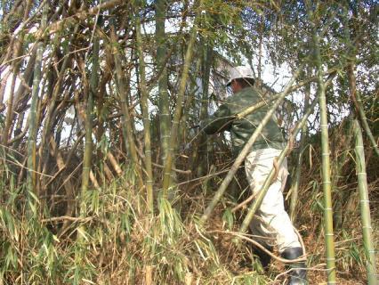 竹やぶって本当に藪…