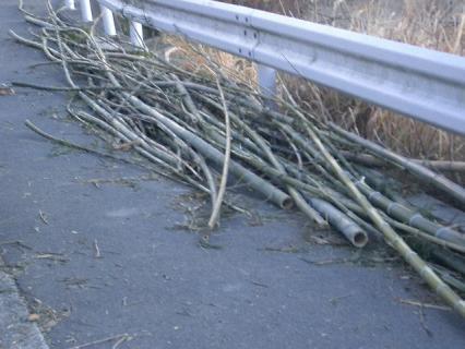 枝をはらった竹