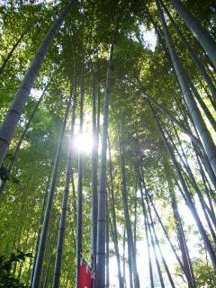 うっそうとした竹の林立