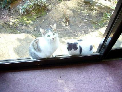 猫がいっぱいいるのも不思議(^^;) 640x480