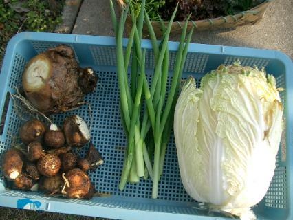 今日の収穫2 2008-03-11 16-07-51