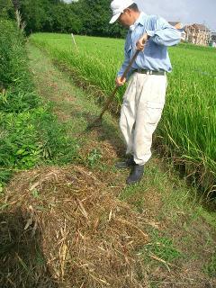 畦草を集めて堆肥に?(^^;)