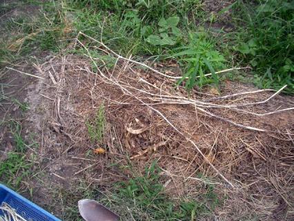 トウモロコシ2弾の跡地