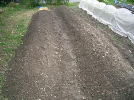 お師匠さま用の畝を耕して、整地しました