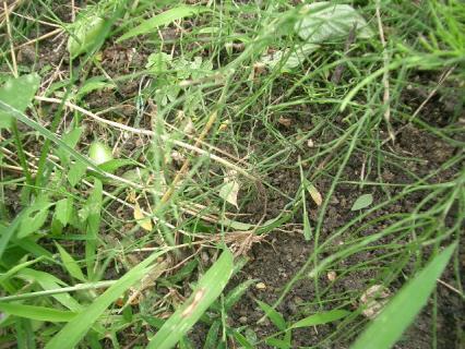 草を刈り取り、落ちたアイコを拾った