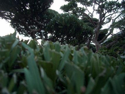散髪したての坊ちゃんのような庭木たち