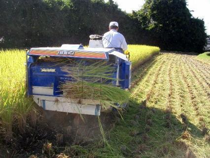 藁を作っているところ