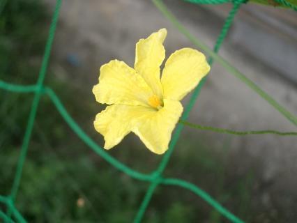 なんの花でしょう?(^-^)