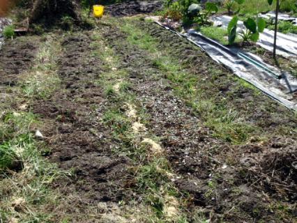 刈り草は畦の溝に入れた